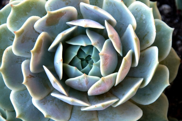 an isolated shot of succulent plants growing